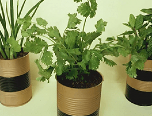DIY – Little pots for your plants